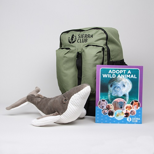 Humpback Whale Deluxe Set LARGE