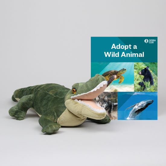 Adopt a Wild Animal Alligator LARGE