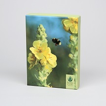 Sierra Club Bees Boxed Notecards THUMBNAIL