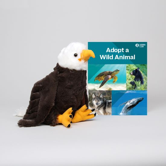 Adopt a Wild Animal Bald Eagle LARGE