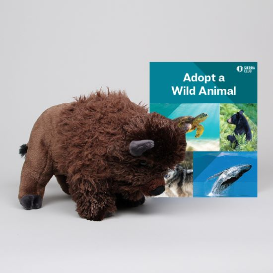 Adopt a Wild Animal Bison LARGE