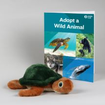 Eco-Plush Sea Turtle Set THUMBNAIL