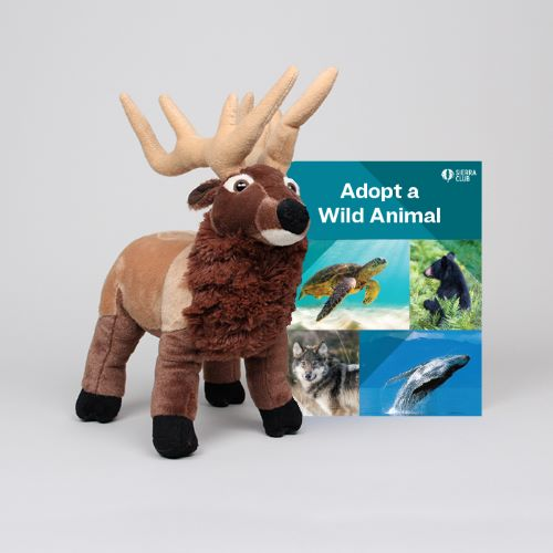 Adopt a Wild Animal Elk LARGE