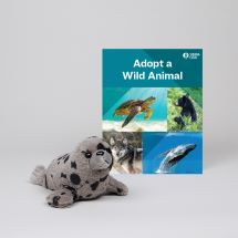 Adopt a Wild Animal Harbor Seal THUMBNAIL