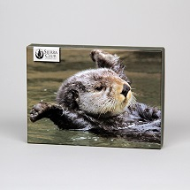 Sierra Club Otters Boxed Notecards THUMBNAIL