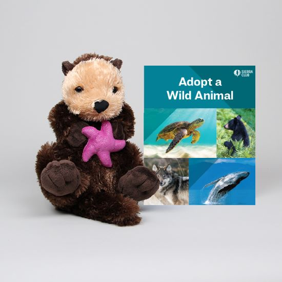 Adopt a Wild Animal Sea Otter LARGE