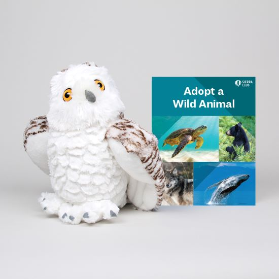 Adopt a Wild Animal Snowy Owl LARGE