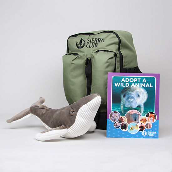 Humpback Whale Deluxe Set