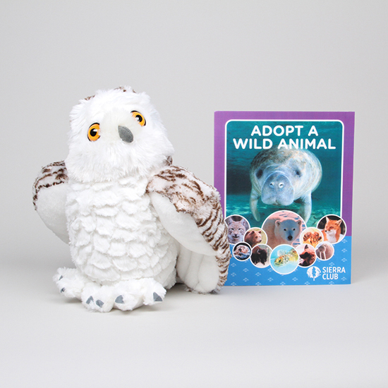 Snowy Owl Set Sierra Club Online Store