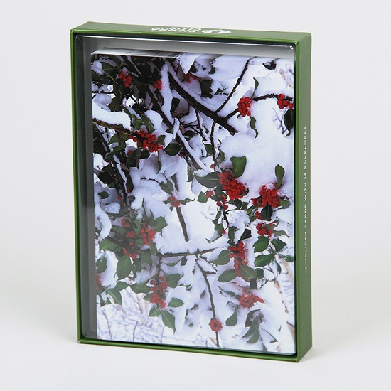Sierra Club Holly Branches in Snow Holiday Cards LARGE