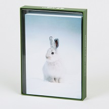 Sierra Club Snowshoe Hare Holiday Cards THUMBNAIL