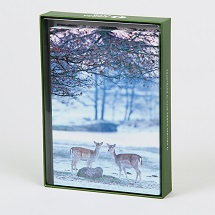 Sierra Club Fallow Deer in Winter Holiday Cards THUMBNAIL