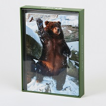 Sierra Club Kodiak Brown Bear Holiday Cards THUMBNAIL
