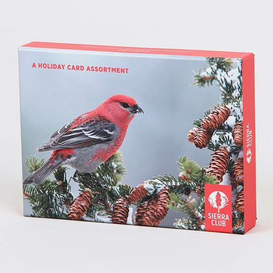 Sierra Club Winter Birds Holiday Card Assortment LARGE
