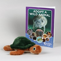 Adopt a Wild Animal Sea Turtle THUMBNAIL