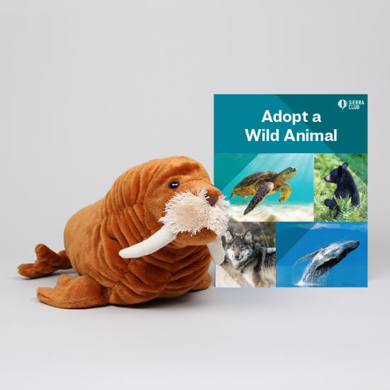 Adopt a Wild Animal Walrus LARGE