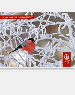Sierra Club Winter Birds Holiday Card Assortment