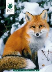 Sierra Club Winter Wildlife Holiday Card Assortment