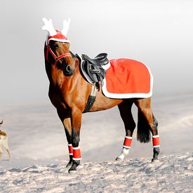 Holiday Riding Rug