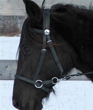 Nurtural Bitless Synthetic Bridle by Circle-X LARGE