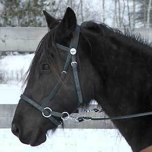 BRIDLE:  Nurtural Bitless Synthetic Bridle