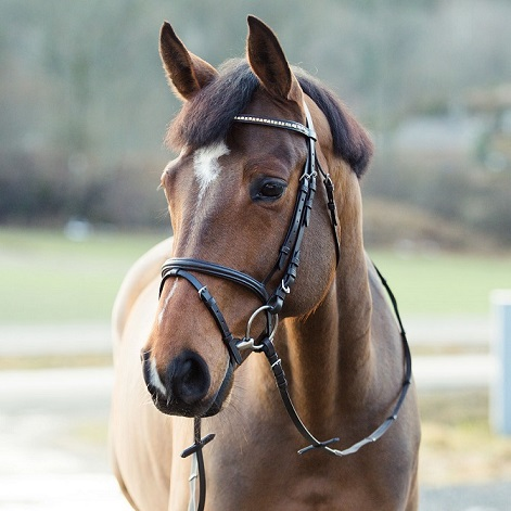 HorZe Weston Bridle Set