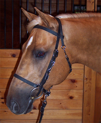 BRIDLE:  Beta Halterbridle with Side Bit Snaps MAIN