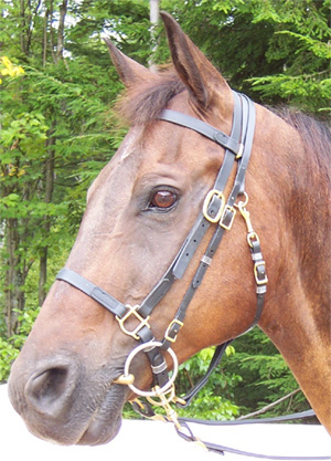 BRIDLE:  Beta Halterbridle With Over The Poll Bit Hanger
