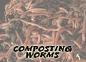 buy live red worms for live fishing bait from Speedy Worm