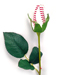 Baseball Rose in Clear Case Gift Arrangement SWATCH