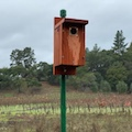 Storrs' Bluebird Nesting Box Workshop & Vineyard Tour - Postponed THUMBNAIL