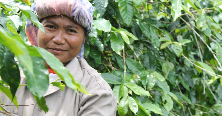Sumatra Coffee Farmer