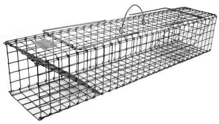 "Collapsible Colony Trap - Muskrat Size (28"" x 5"" x 5"") Folds Flat THUMBNAIL"