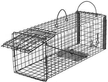 Skunk - Galvanized Metal Transfer Live Animal Transfer Trap with 1 x 1 Wire Grid