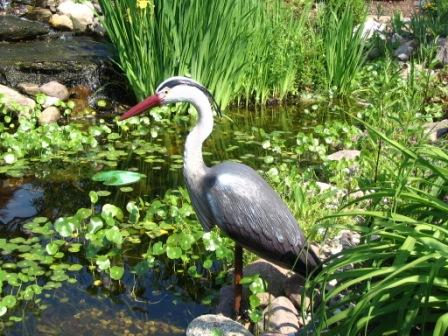 Adolescent Male Blue Heron Decoy For Water Garden & Pond Predator Control
