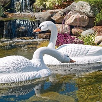 Floating White Swan Decoy for Canada Geese Control in Water Gardens & Ponds