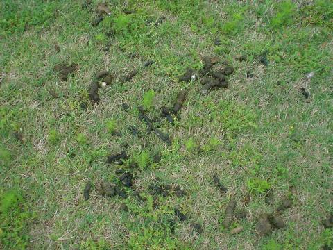 Water Garden Amp Pond Products Predator Controls Heron