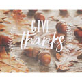 Light Box Insert - Acorns - Give Thanks