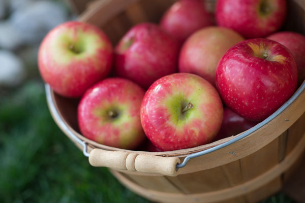 Red Orchard Fresh Apples in Wooden Bucket THUMBNAIL