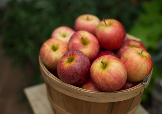 Orchard fresh red colored gala apples