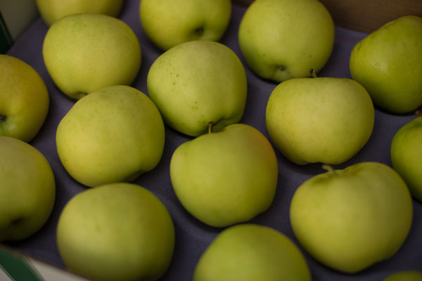 Orchard fresh yellow colored ginger gold apples