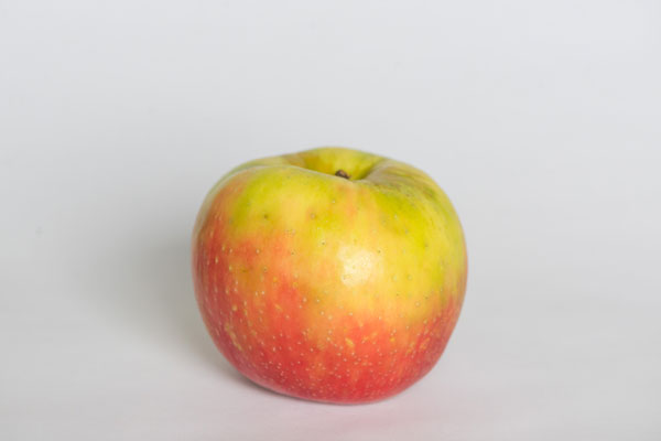 Honey Crisp Mini-Thumbnail