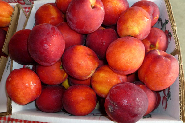 Fresh orchard nectarines in box THUMBNAIL