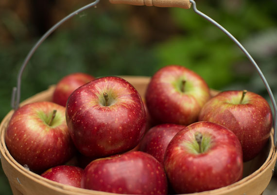 Orchard Fresh Red Delicious Apples in Wooden Bucket THUMBNAIL
