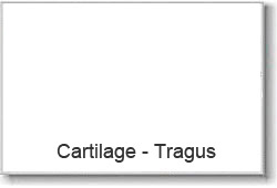 Cartilage-Tragus