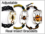 Insect Bracelet Jewelry #FAB40-- THUMBNAIL