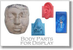 Body Part Displays